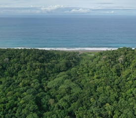Protecting the rainforest, together with AI