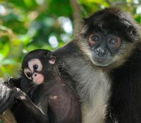 Saving the rainforest by listening