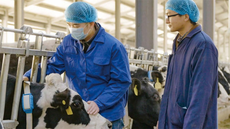 A new cash cow in the dairy field - Huawei Publications