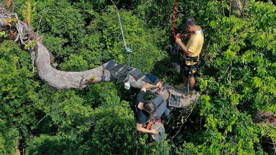 philippines rainforest